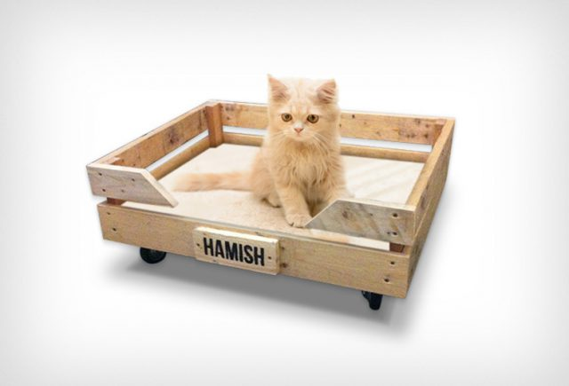 Cat-Trolley-v2-785x522